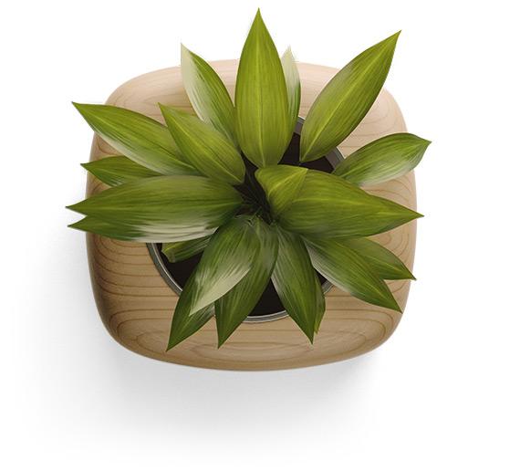interior-plant
